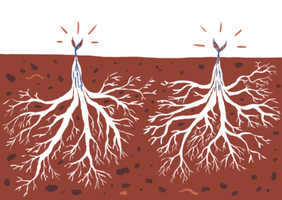Plants with huge root systems, and small growth above ground