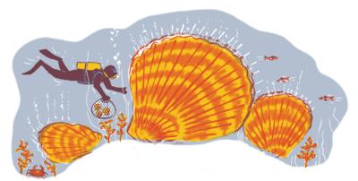 scubadiving among huge muscles and sea life