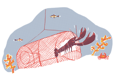lobster cutting itself out of trap